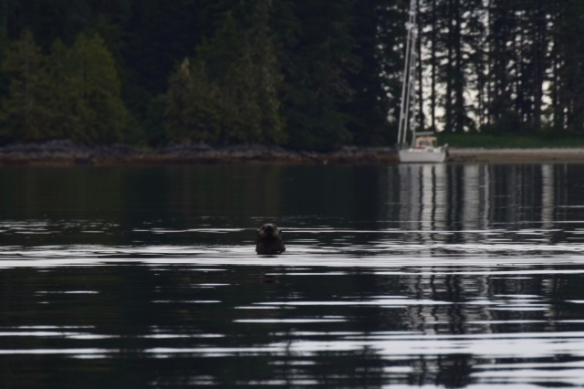 Otter w:Gadabout