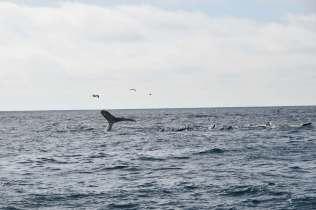 whale-sea-lion-scene