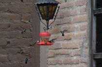 el-fuerte-hummingbirds