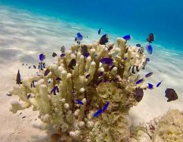 Tiny coral fish 2