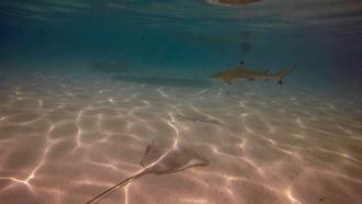 Underwater buddies