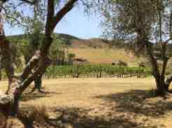 Waiheke winery